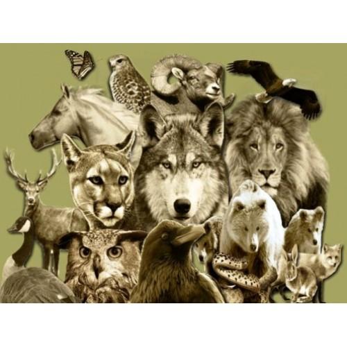 Rehber Hayvan Ruhu Reiki - Animal Spirit Guide Reiki